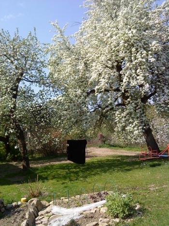 Kapfham im Frühling