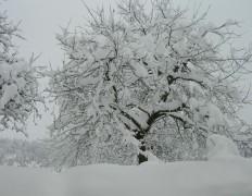 Auf unserem Hof im Winter